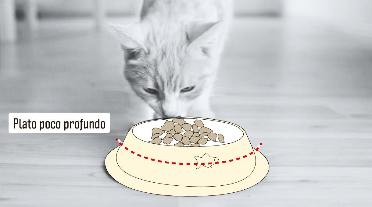 plato poco profundo para gatos, cachorros y perros de nariz chata